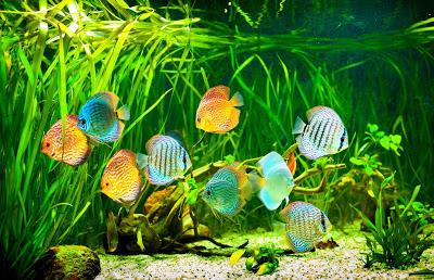 peces-en-el-fondo-del-mar-fotos-del-oceano-con-vida-marina